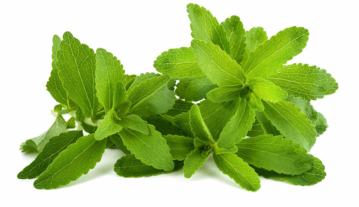 Benefits Of Stevia Leaf For Diabetes - Herbal Blog
